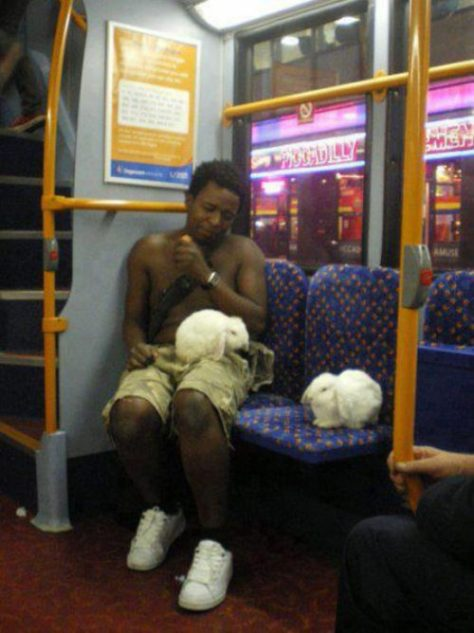 stuff-you-see-on-public-transport-1