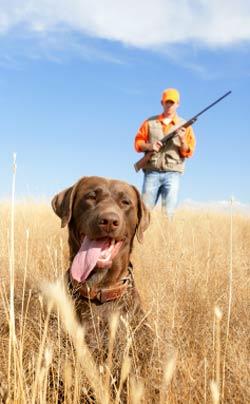 Caçadores bons para cachorro