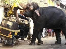 Medo de Elefantes