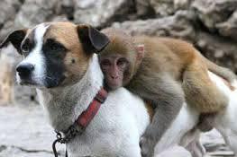 Macacos & Cachorros