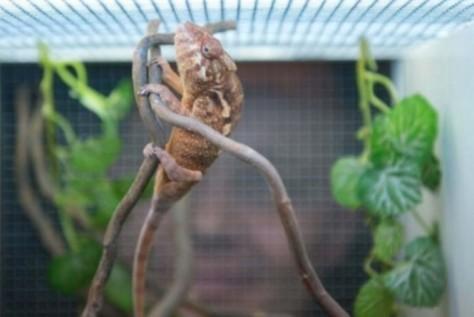 Camaleões & Gravidade